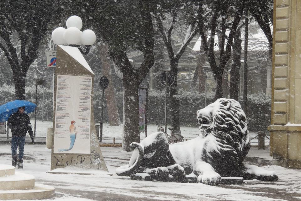 Leone sotto la neve