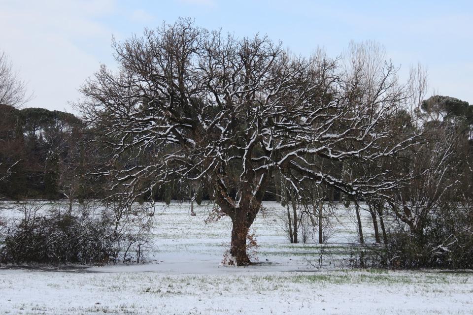 Maestosità arborea